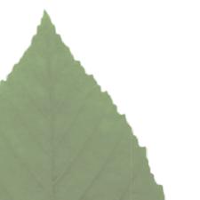 charte-verte