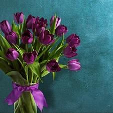 tulipes-carre